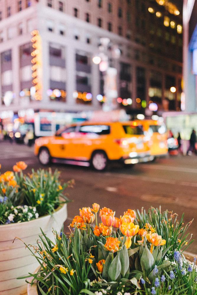 reportage-voyage-new-york-usa-avril-2015-printemps-rose-fushia-photographie-109