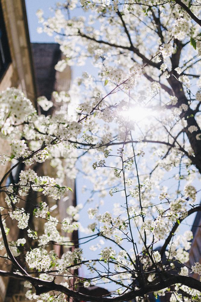 reportage-voyage-new-york-usa-avril-2015-printemps-rose-fushia-photographie-131