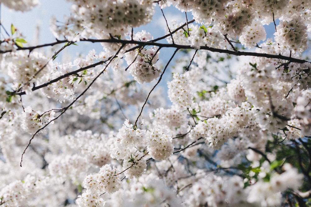 reportage-voyage-new-york-usa-avril-2015-printemps-rose-fushia-photographie-15