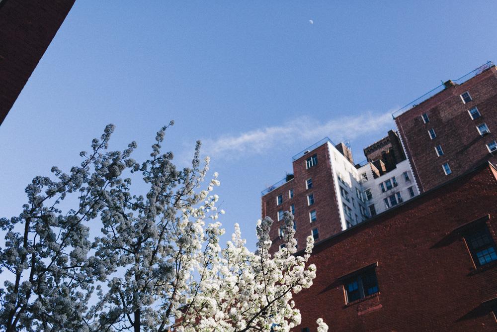 reportage-voyage-new-york-usa-avril-2015-printemps-rose-fushia-photographie-150