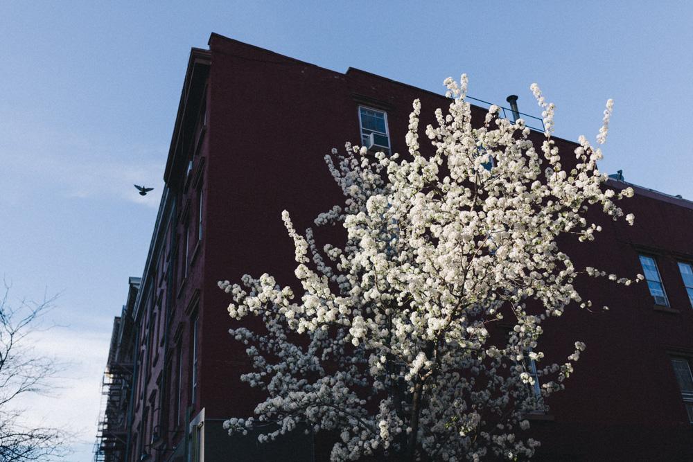 reportage-voyage-new-york-usa-avril-2015-printemps-rose-fushia-photographie-151