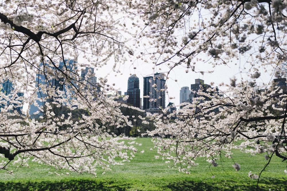 reportage-voyage-new-york-usa-avril-2015-printemps-rose-fushia-photographie-16