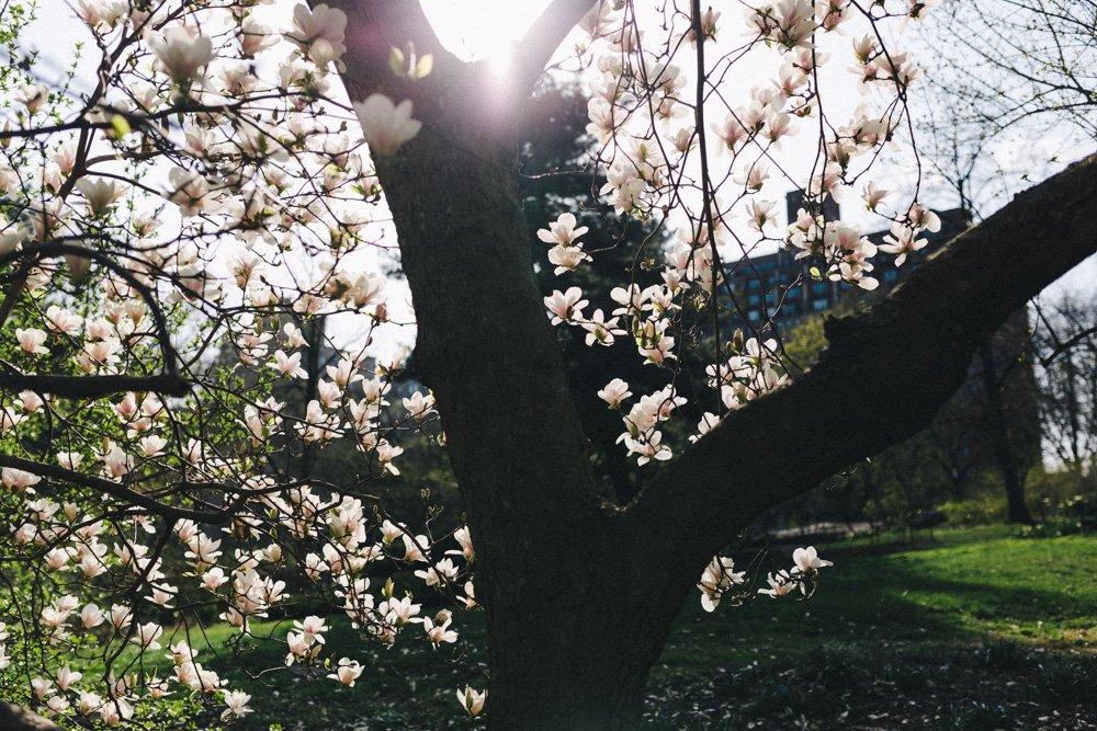 reportage-voyage-new-york-usa-avril-2015-printemps-rose-fushia-photographie-19