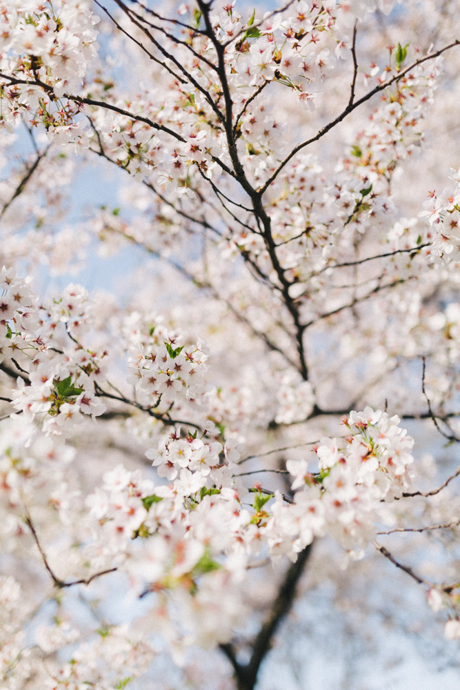 reportage-voyage-new-york-usa-avril-2015-printemps-rose-fushia-photographie-26