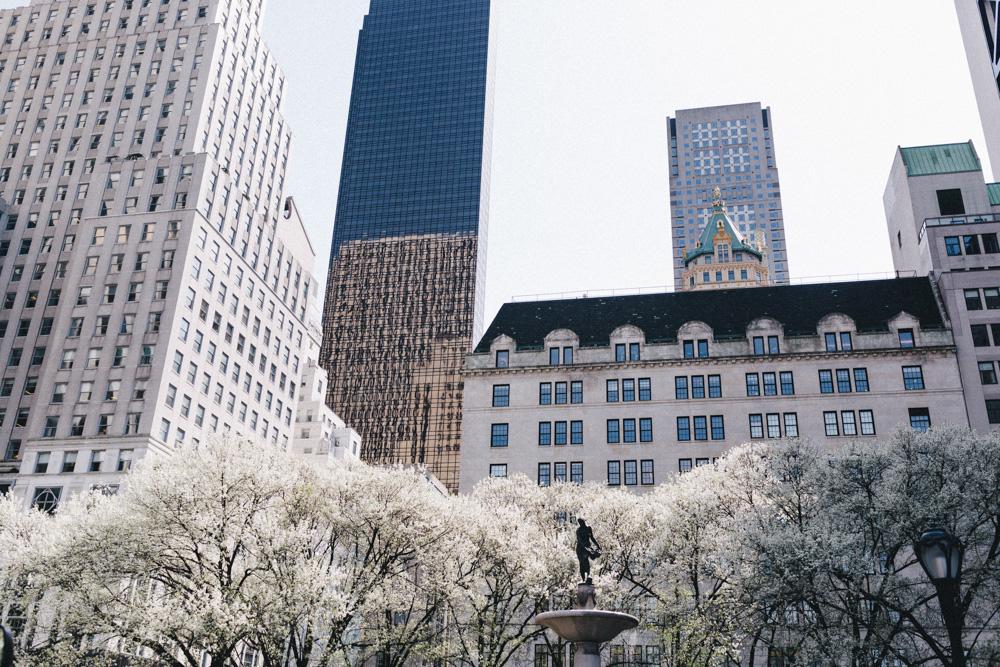 reportage-voyage-new-york-usa-avril-2015-printemps-rose-fushia-photographie-7