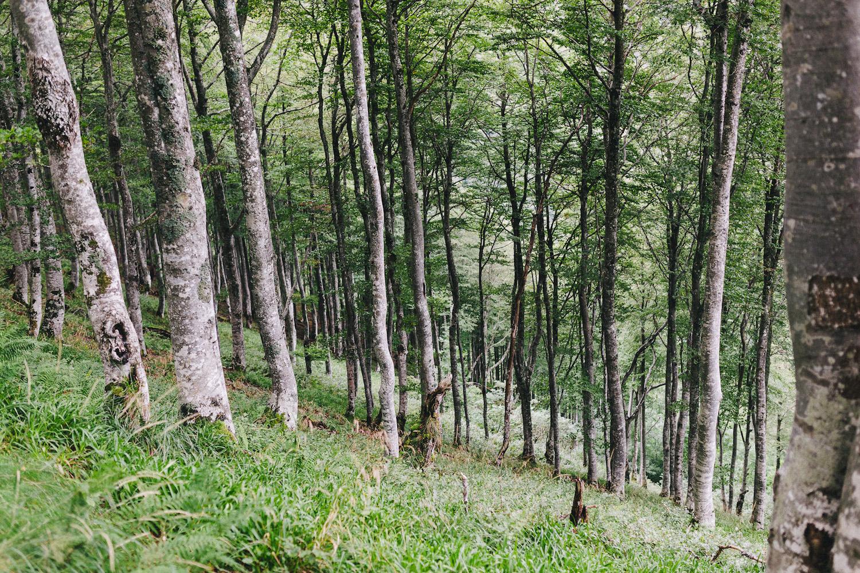 randonnee-au-lac-d-ayes-pyrenees-ariegeoises-rose-fushia-photographie014