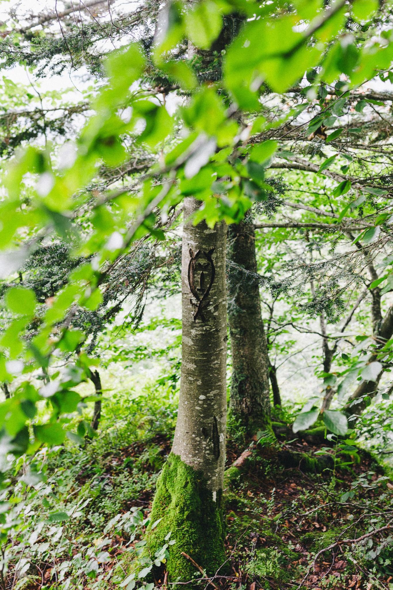 randonnee-au-lac-d-ayes-pyrenees-ariegeoises-rose-fushia-photographie025
