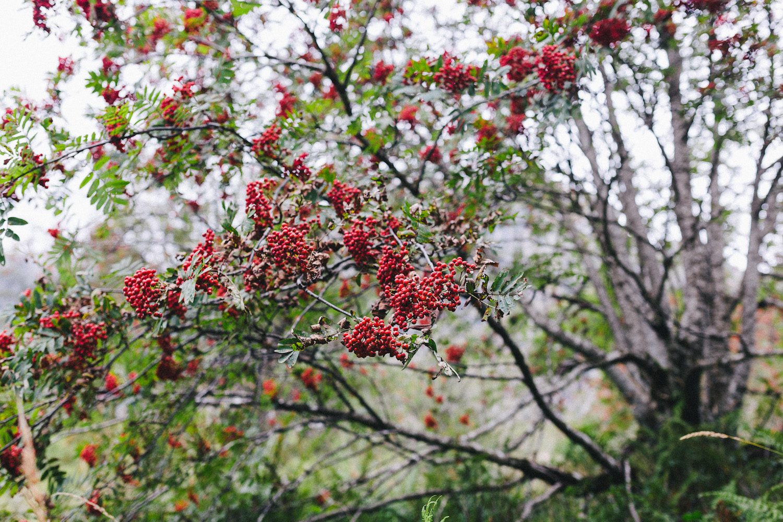 randonnee-au-lac-d-ayes-pyrenees-ariegeoises-rose-fushia-photographie028