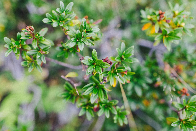 randonnee-au-lac-d-ayes-pyrenees-ariegeoises-rose-fushia-photographie036