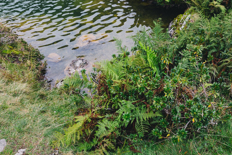 randonnee-au-lac-d-ayes-pyrenees-ariegeoises-rose-fushia-photographie098