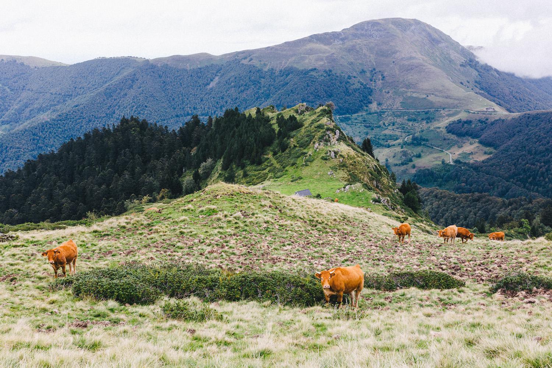 randonnee-au-lac-d-ayes-pyrenees-ariegeoises-rose-fushia-photographie132