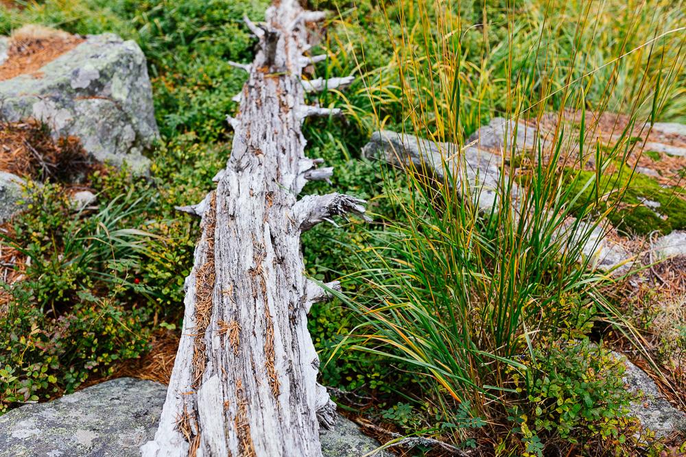 rando-lacs-de-neouvielle-hautes-pyrenees-rose-fushia-photographie-10