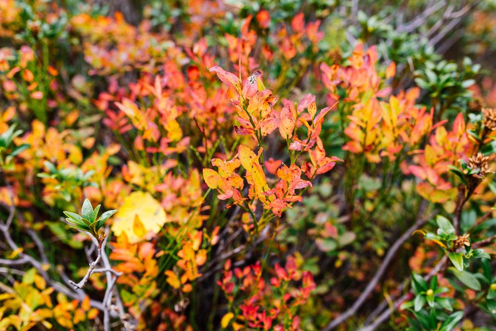 rando-lacs-de-neouvielle-hautes-pyrenees-rose-fushia-photographie-54