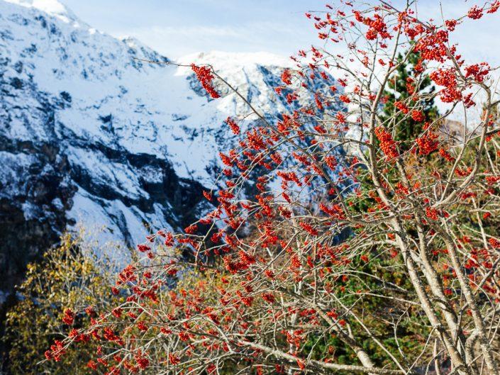 L'hiver en automne au lac d'Espingo