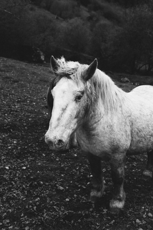 rando-pyrenees-lac-d-oo-lac-d-espingo-rose-fushia-photographie-63