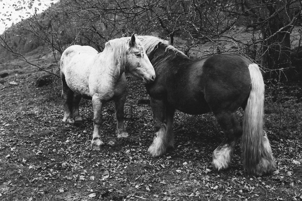 rando-pyrenees-lac-d-oo-lac-d-espingo-rose-fushia-photographie-74