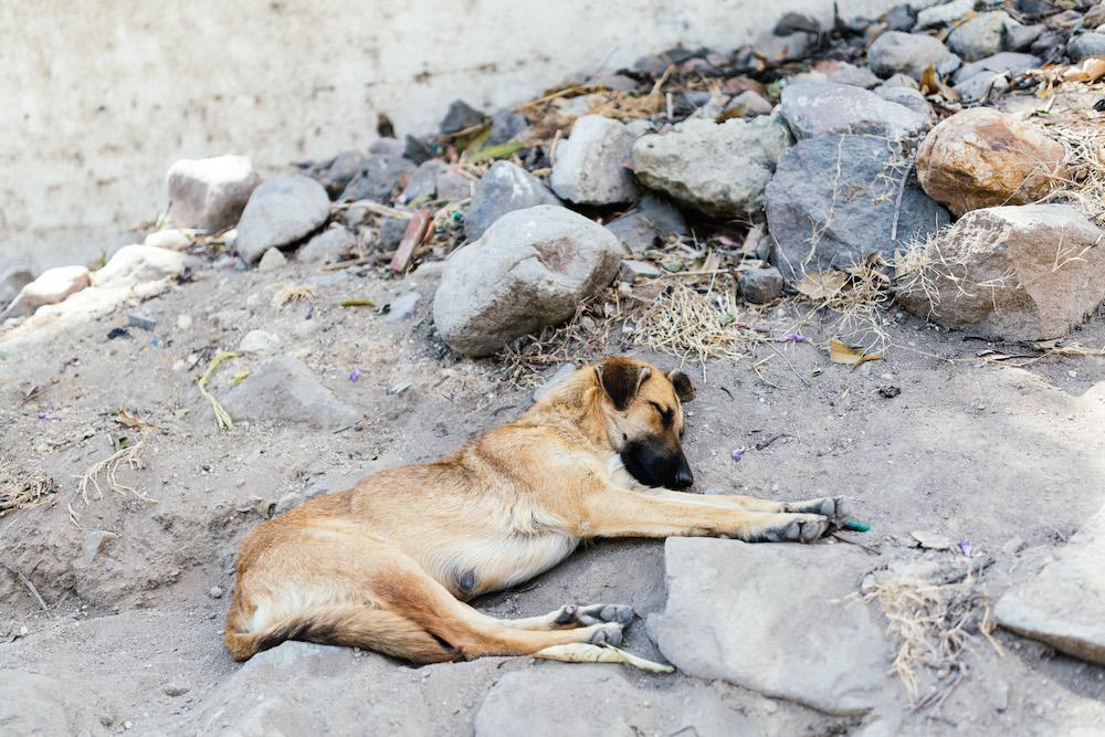 voyage-guatemala-belize-7-semaines-rosefushiaphotographie113